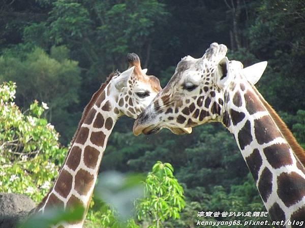 台北動物園029.JPG