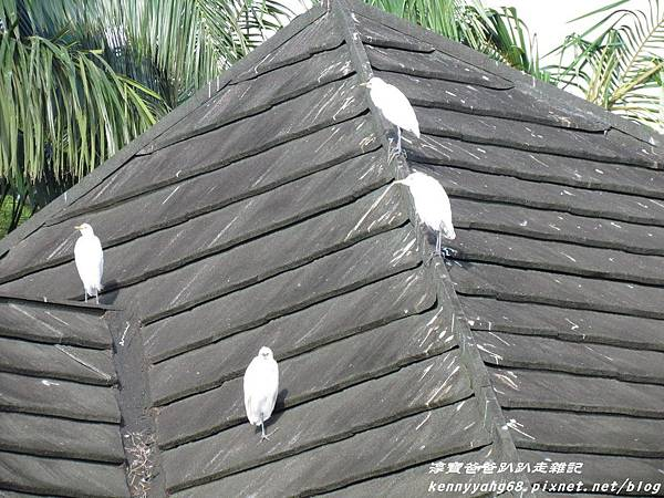 台北動物園033.JPG