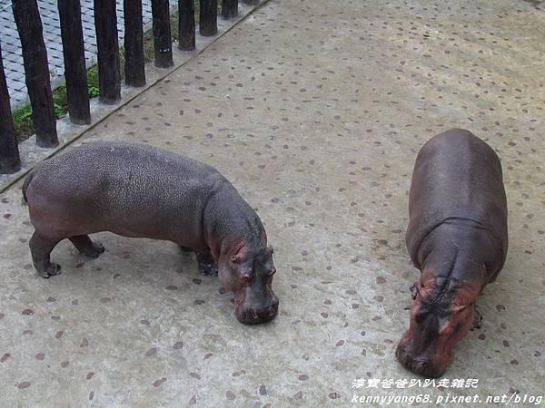 台北動物園043.JPG