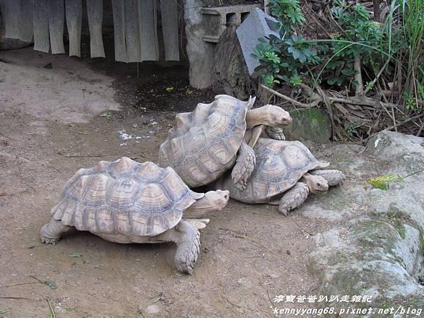 台北動物園048.JPG