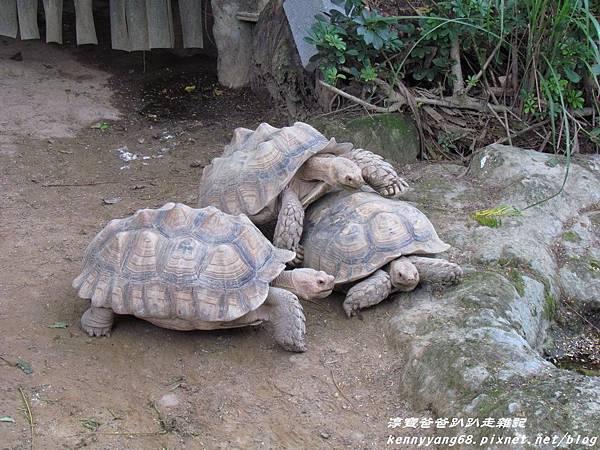 台北動物園049.JPG
