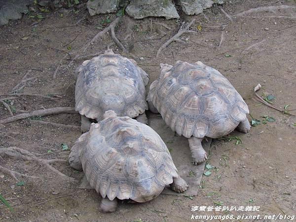 台北動物園050.JPG