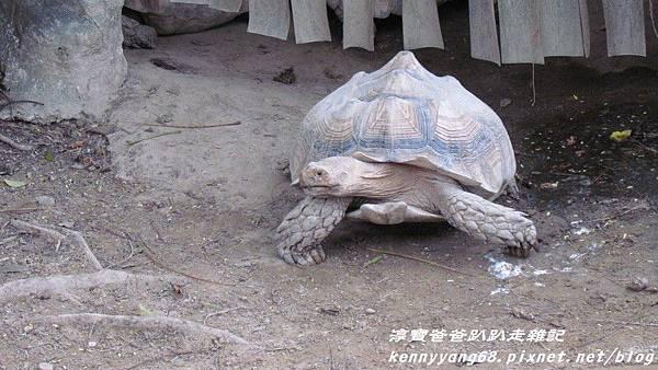 台北動物園051.JPG