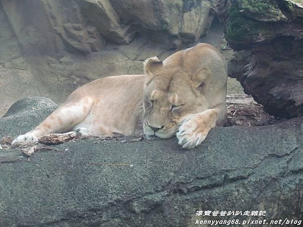 台北動物園052.JPG