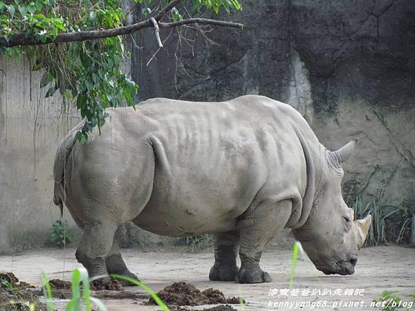 台北動物園053.JPG