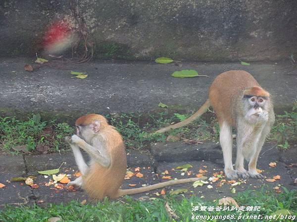 台北動物園058.JPG