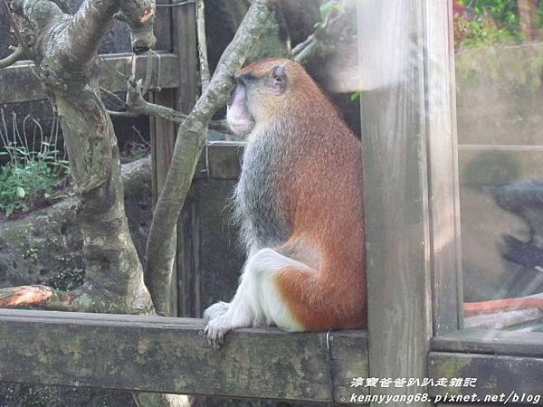 台北動物園057.JPG