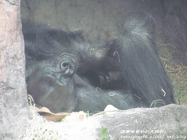 台北動物園060.JPG