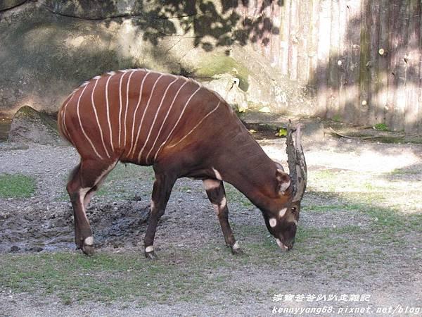 台北動物園059.JPG