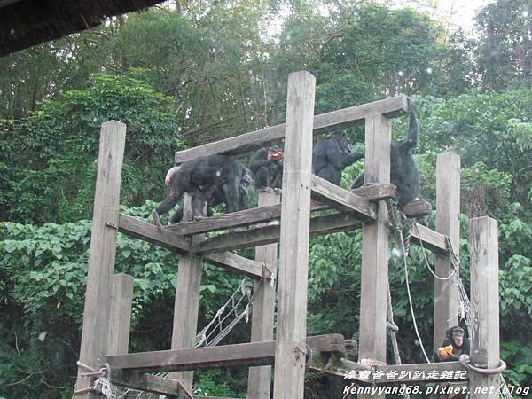 台北動物園070.JPG