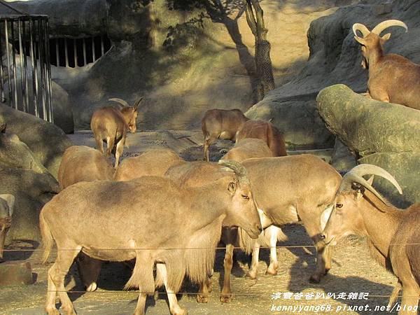 台北動物園072.JPG