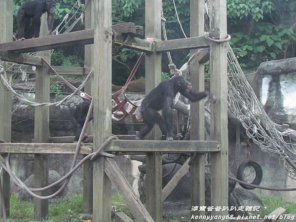 台北動物園071.JPG