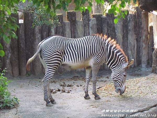 台北動物園079.JPG
