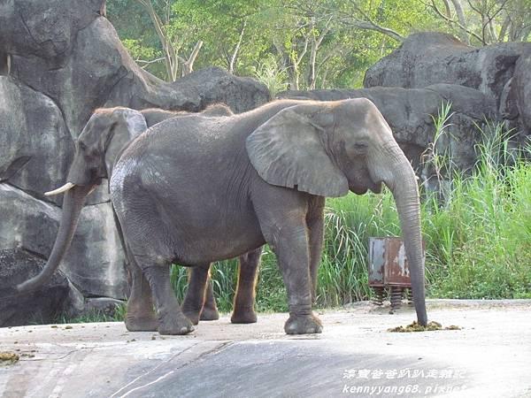台北動物園080.JPG