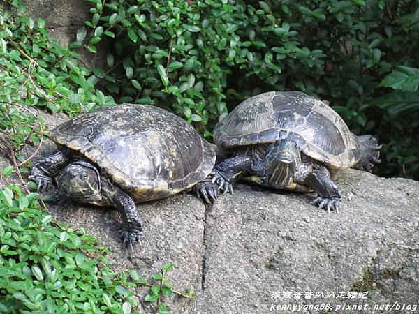 台北動物園083.JPG