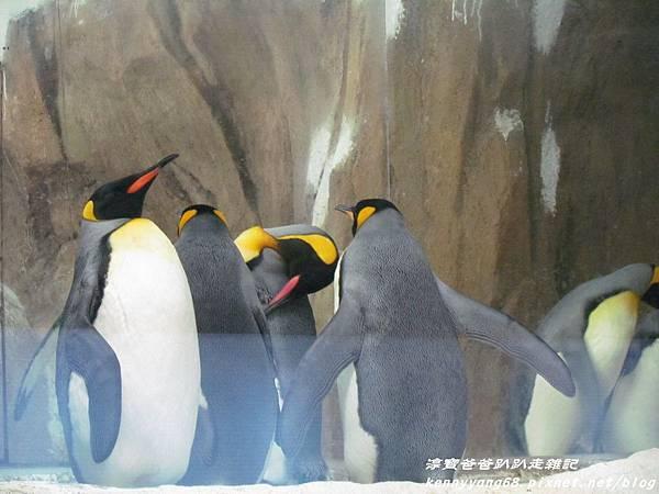 台北動物園088.JPG