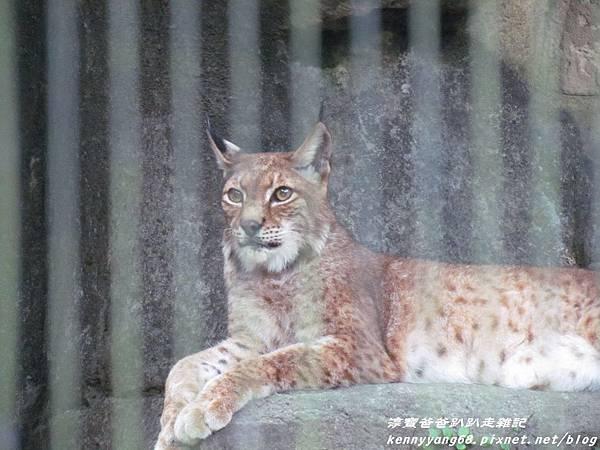 台北動物園102.JPG