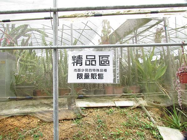 新竹福祥仙人掌-25.JPG