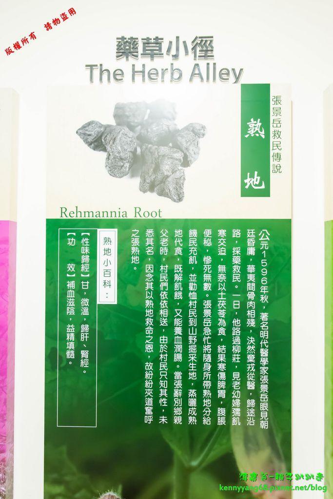淳寶爸-天一藥廠41.JPG