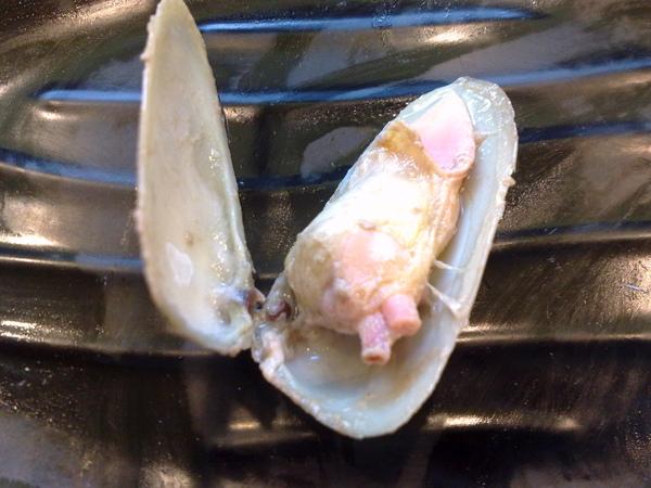 0605食記-不知名的貝