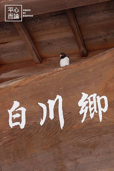 白川鄉合掌村 (2).JPG