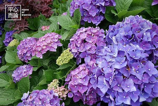 大梯田花卉生態農園 (5)