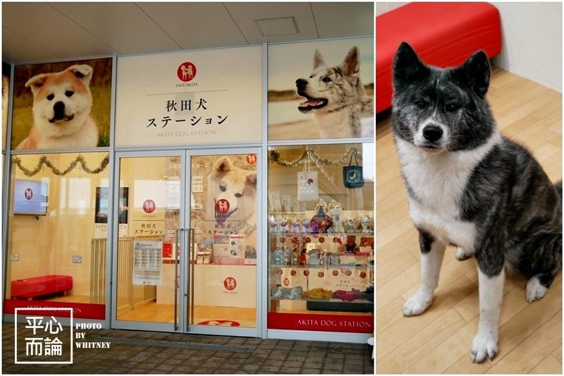秋田犬ステーション(Akita Dog Station) (1).jpg