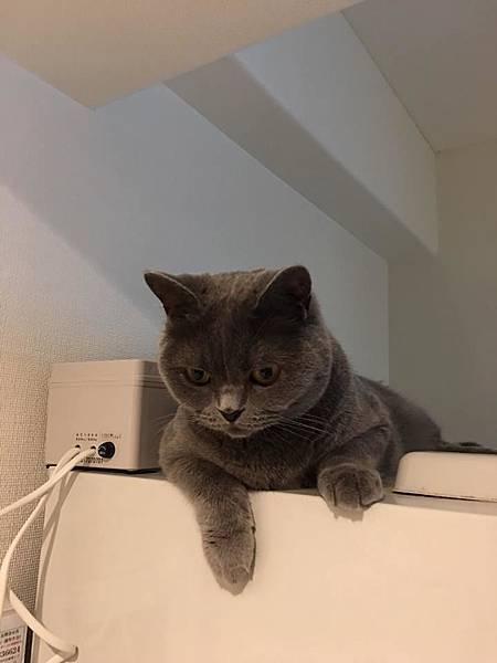 喜歡等離子體的貓.jpg
