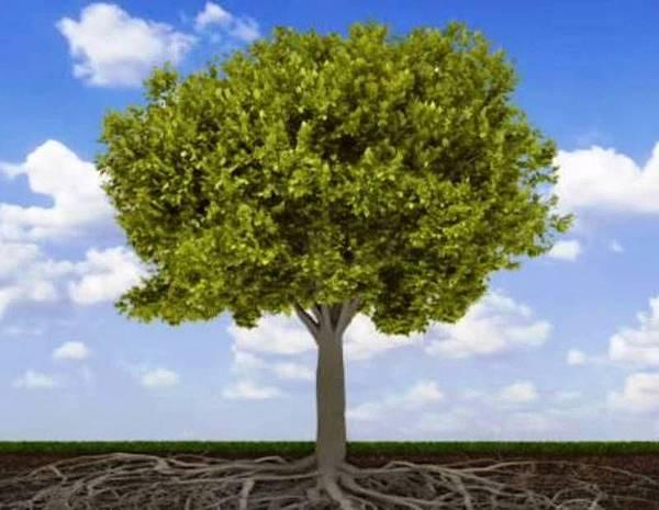 植物為什麼有根.jpg
