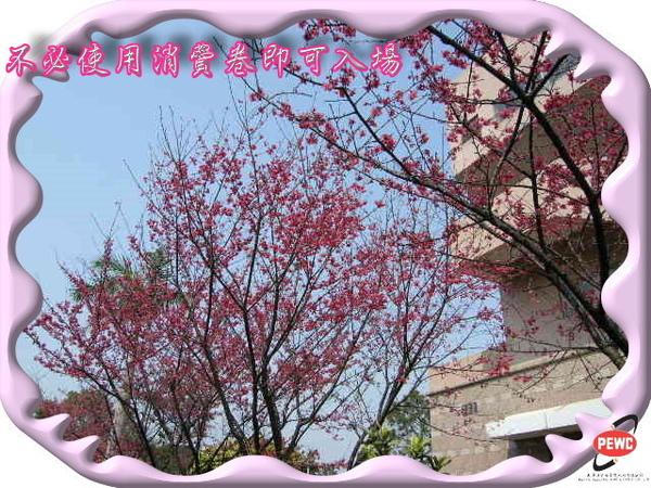 櫻花 04-1.jpg