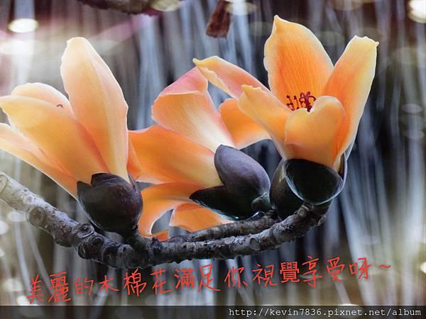 DSCN1001_mh1459814198125.jpg