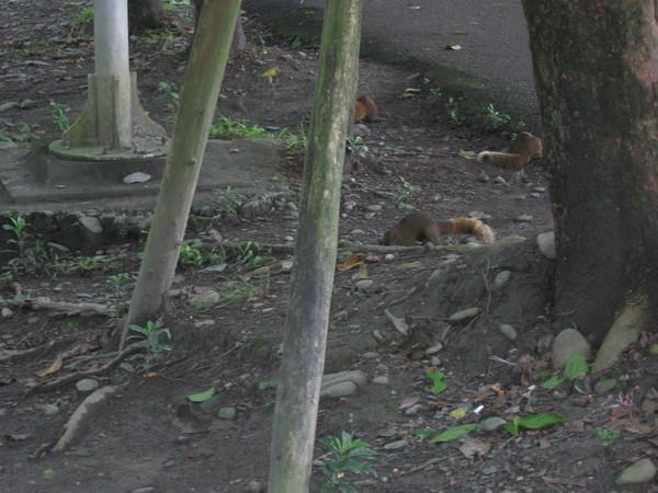 13公園裡松鼠比人還多
