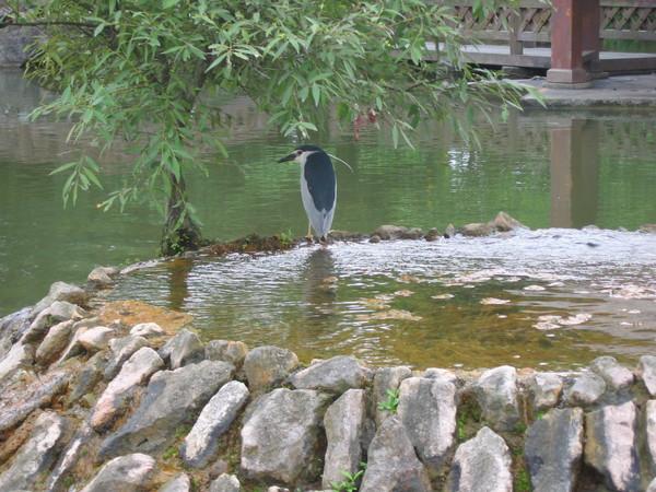 14水池邊不知名的鳥