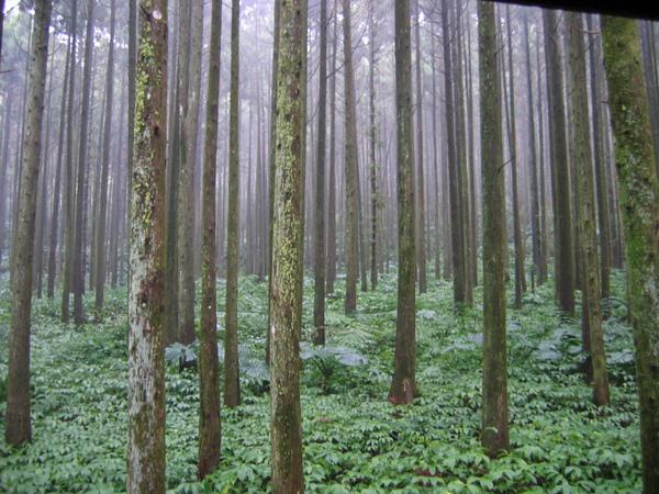 滿滿的樹木