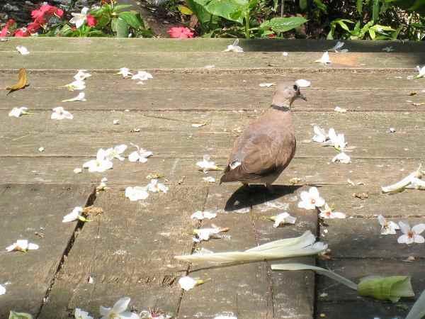 12貪吃的小鳥.他正在吃地上的玉米粒