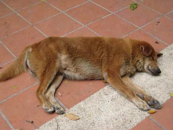 06隨地而睡的狗狗