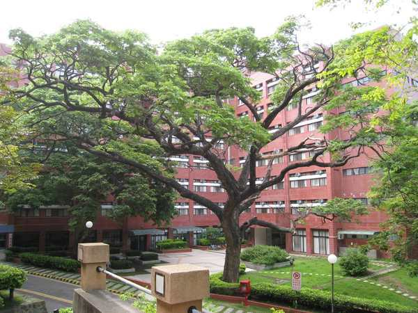 05L棟前的大樹.jpg