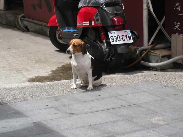 83可愛的狗.jpg