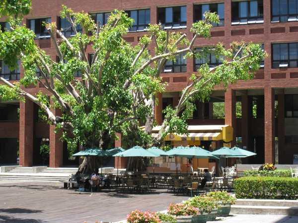 159菩提樹下咖啡.jpg
