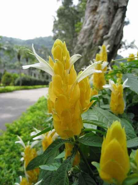 08盛開的花朵.jpg