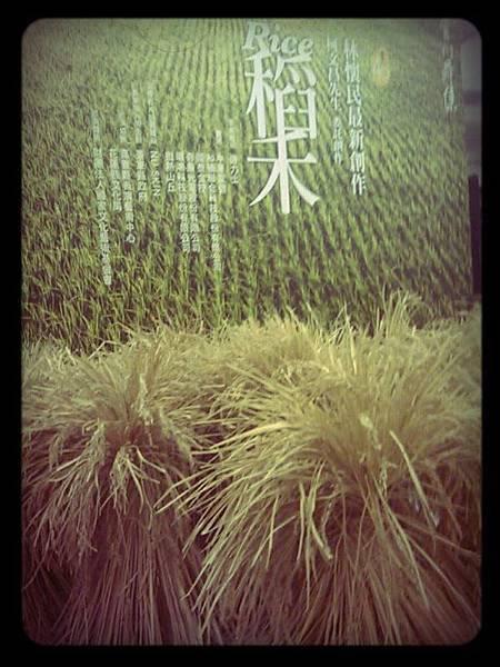 1221-稻禾