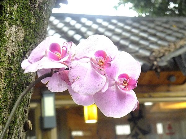 插有蘭花的樹