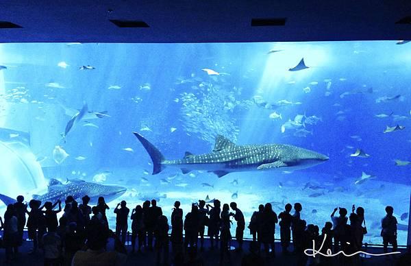 沖繩美麗水族館-1.jpg
