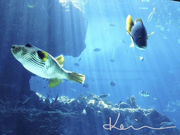 沖繩美麗水族館-2.jpg