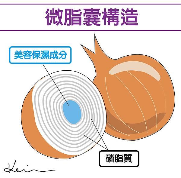 微脂囊構造-01.jpg