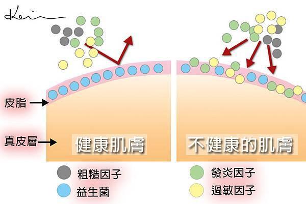 細菌有示意圖.jpg