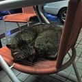 店裡的招牌貓2