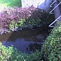 縣政府旁邊的小水溝1