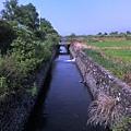 縣政府旁邊的小水溝2