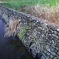 縣政府旁邊的小水溝3